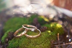 3 золотых обручального кольца на предпосылке мха Стоковое Изображение