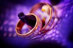 2 золотых обручального кольца на фиолетовой предпосылке с светлой нежностью Стоковое фото RF