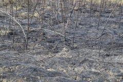 Золы от, который сгорели травы на почве После того как огонь, ландшафт Стоковые Изображения