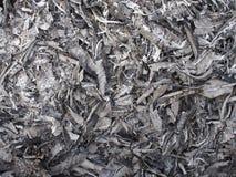 Золы формы лист стоковое изображение