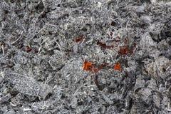 золы smoldering Стоковые Фотографии RF
