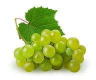 Зрелая виноградина зеленого цвета пука с лист Стоковое Фото