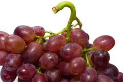 Зрелая красная виноградина при пук изолированный на белой предпосылке Стоковые Фотографии RF