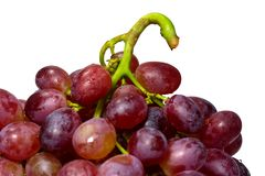 Зрелая красная виноградина при пук изолированный на белой предпосылке Стоковое Изображение RF