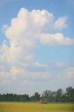 зрелая пшеница Стоковая Фотография