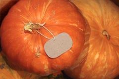 Зрелая тыква с пустой цен-биркой Стоковое Фото