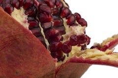 Зрелое красное гранатовое дерево Стоковые Изображения