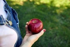 Зрелое красное яблоко в руке стоковые фото