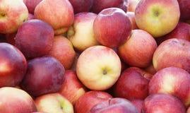 зрелое яблок красное Стоковая Фотография RF