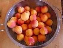 Зрелые абрикосы в сетке стоковое изображение