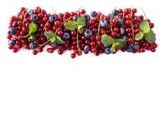 Зрелые голубики и красные смородины изолированные на белой предпосылке Смешанные ягоды на границе изображения с космосом экземпля стоковое фото rf