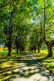 Зрелые деревья клена вдоль обеих сторон майны Стоковые Фото