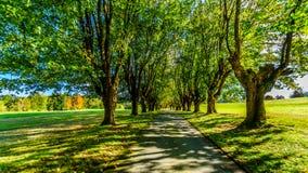 Зрелые деревья клена вдоль обеих сторон майны Стоковое Изображение RF