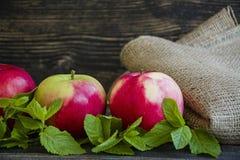 Зрелые красные яблоки с мятой r r стоковые фото