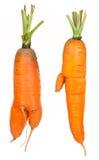 Зрелые моркови стоковые фотографии rf