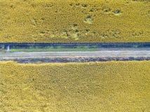 Зрелые рисовые поля стоковые изображения rf
