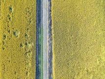 Зрелые рисовые поля стоковое изображение rf