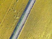 Зрелые рисовые поля стоковая фотография rf