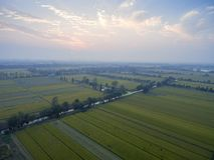 Зрелые рисовые поля стоковое фото