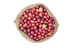 Зрелые семена кофе Стоковые Фотографии RF