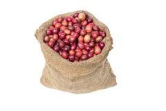 Зрелые семена кофе Стоковая Фотография