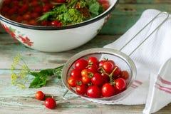 Зрелые томаты вишни, листья сельдерея и укроп, ингредиенты для консервировать на деревянной предпосылке стоковые фотографии rf