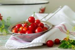 Зрелые томаты вишни, листья сельдерея и укроп, ингридиенты для консервировать на деревянной предпосылке стоковые фото