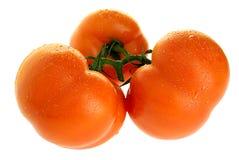 зрелые томаты стоковое изображение