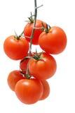 зрелые томаты Стоковое фото RF