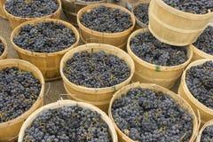 Зрелые фиолетовые виноградины, который хранят в круглых деревянных корзинах Стоковая Фотография RF