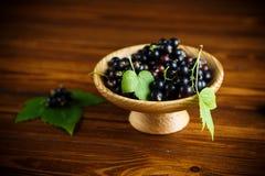 Зрелые черные смородины ягод стоковые изображения