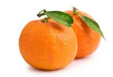 зрелые tangerines Стоковые Фотографии RF