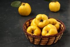 Зрелый желтый плод айвы на темной предпосылке стоковые фотографии rf