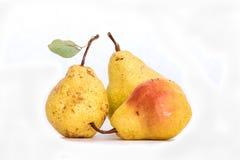 Зрелый желтый цвет 3 снял кожу с груш, немножко неидеальной свежей органической красивой груши Bartlett съемки студии с стержнем  Стоковое Фото