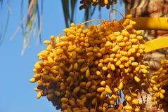зрелый желтый цвет Стоковая Фотография RF