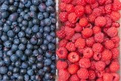 Зрелый и сочный свежий конец-вверх ягод Одичалые голубики и поленики на заднем плане стоковые фотографии rf