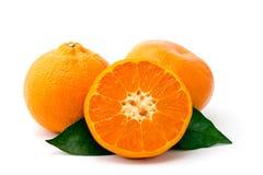 Зрелый крупный план tangerines на белизне Стоковые Фото