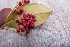 Зрелый одичалый плодоовощ красного цвета Стоковое Изображение RF