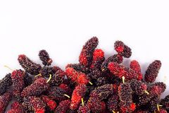 Зрелый плодоовощ шелковицы сладостный и кислый плодоовощ на изолированной еде плодоовощ шелковицы белой предпосылки здоровой Стоковые Фотографии RF