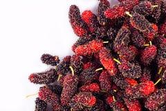Зрелый плодоовощ шелковицы сладостный и кислый плодоовощ на изолированной еде плодоовощ шелковицы белой предпосылки здоровой Стоковые Фото
