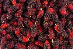 Зрелый Morus шелковицы черный и красный плодоовощ на изолированной еде плодоовощ шелковицы белой предпосылки здоровой Стоковое Изображение RF