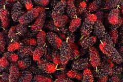 Зрелый Morus шелковицы черн и красн на еде плодоовощ шелковицы белой предпосылки здоровой Стоковые Фото