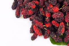 Зрелый Morus шелковицы черн и красн на изолированной еде плодоовощ шелковицы белой предпосылки здоровой Стоковое фото RF