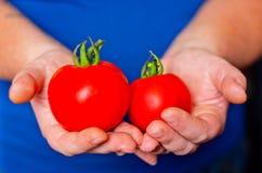 2 зрелых томата в руках Стоковые Фотографии RF