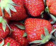 Зрелая красная предпосылка клубники стоковая фотография rf