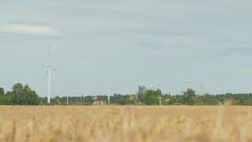 Зрелая нива с ветровой электростанцией в предпосылке сток-видео