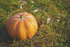 Зрелая оранжевая тыква лежа на траве Стоковые Изображения