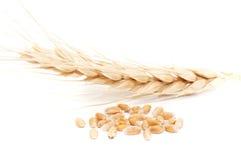 зрелая пшеница Стоковое фото RF