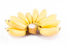 Зрелая рука золотых бананов или банана дамы Пальца на изолированной еде плодоовощ банана Mas Pisang белой предпосылки здоровой Стоковая Фотография