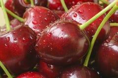 Зрелая темнота вишни - конец-вверх красного цвета Стоковые Фотографии RF